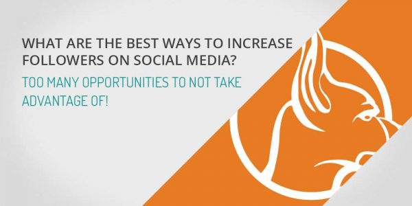 What are the best ways to increase followers on social media?